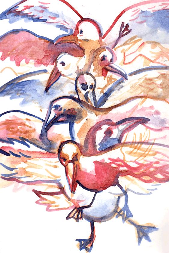 seagullking